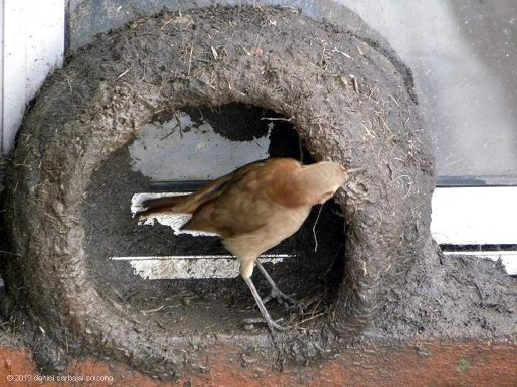 Как птица строит гнездо