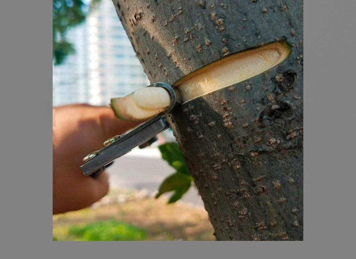 Стимулирование плодоношения фруктовых деревьев