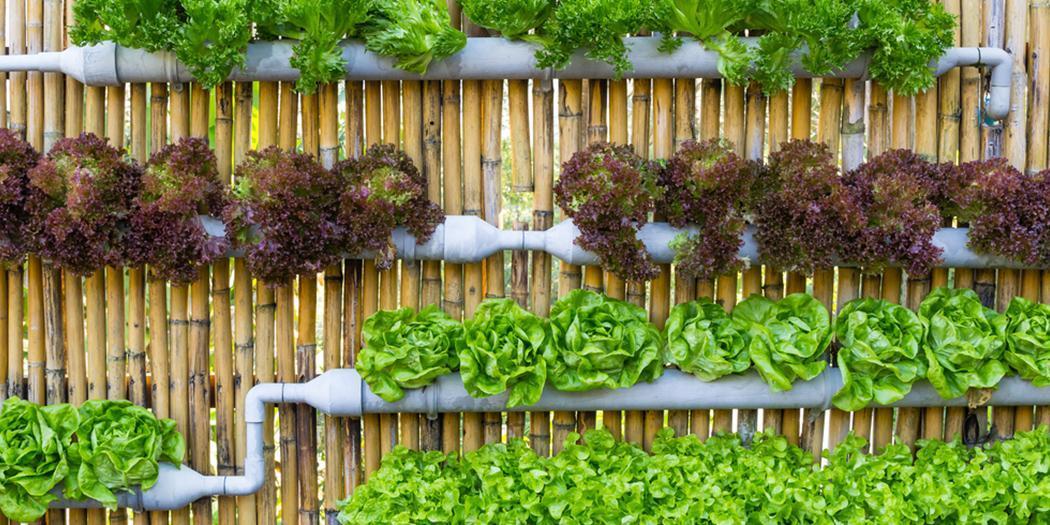 Огород на балконе