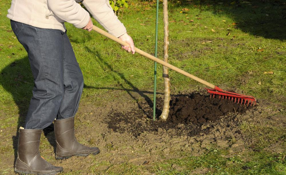 Как использовать компост в саду и огороде