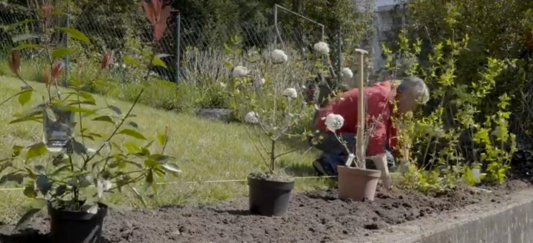 Цветочные изгороди - создание и уход