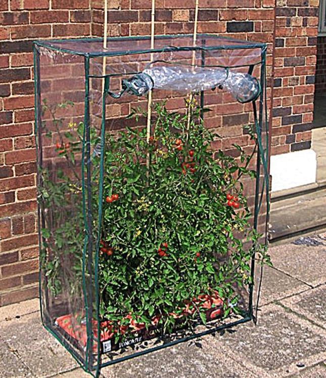 Домик для помидоров - альтернатива теплице