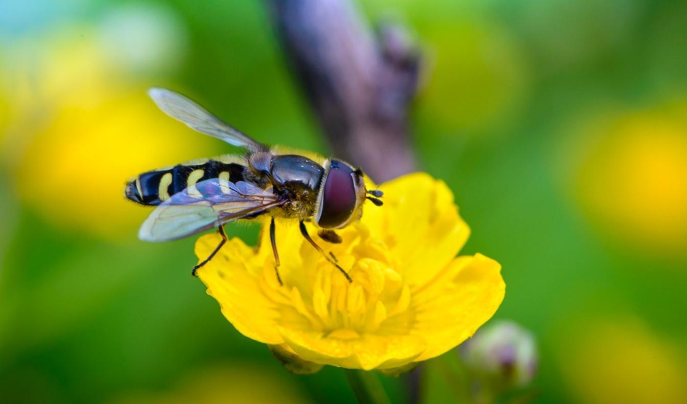 Биологическая защита растений - 7 простых советов