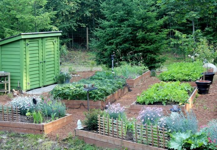 Четыре факта, которые нужно знать огороднику