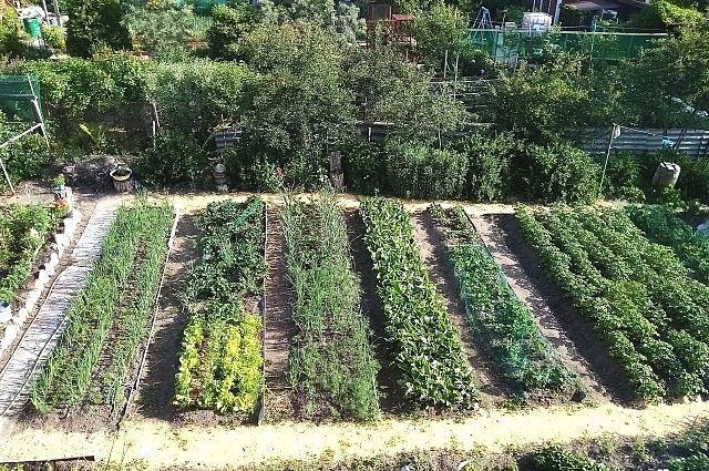 Огород для начинающих - основы посадки и выращивания